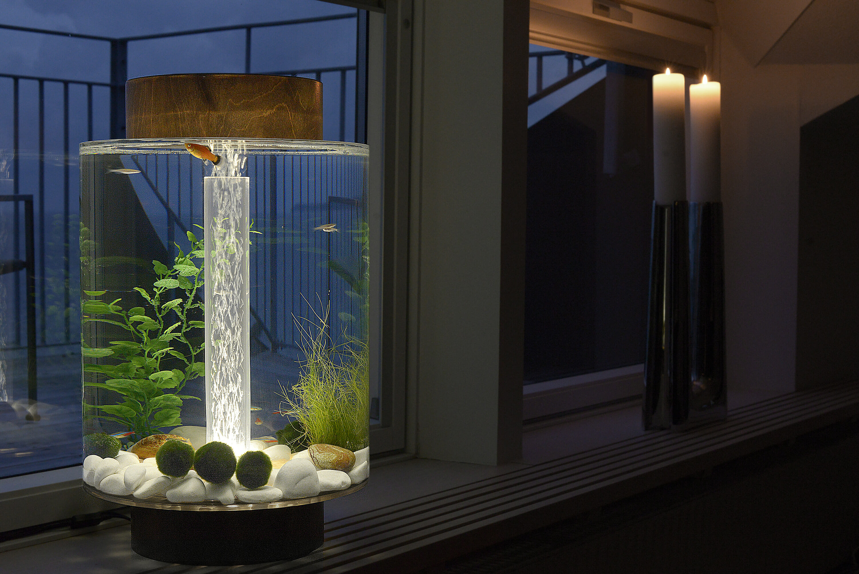 How to Keep your Aquarium Clean – Norrom