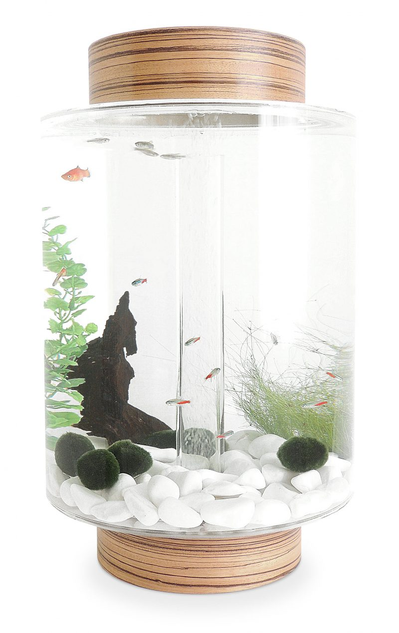 Zebrano aquarium with natural white stones