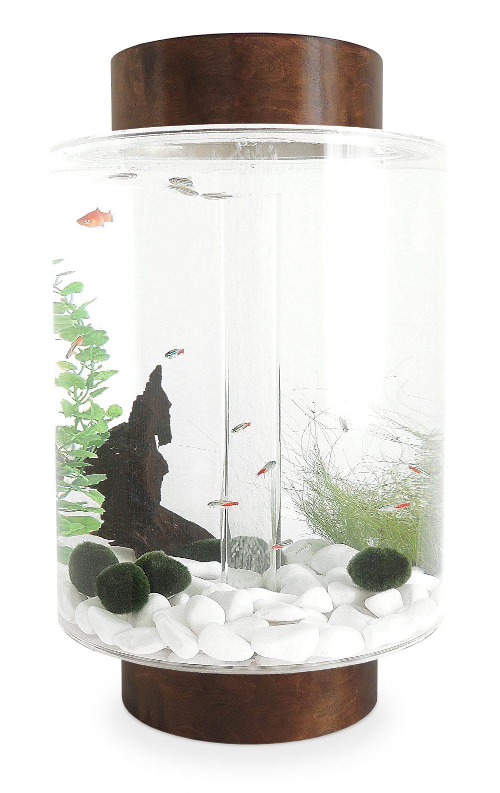 Dark birch aquarium with natural white stones
