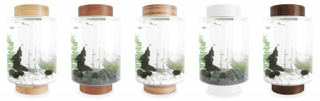 Designer Fish Tanks