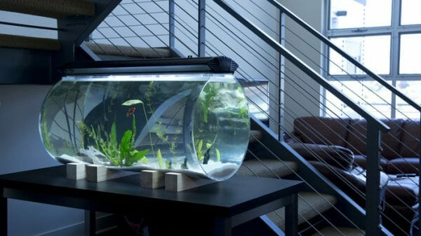Fish Tank not for Sale
